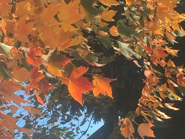 Fall Cleanup – Saturdays in November